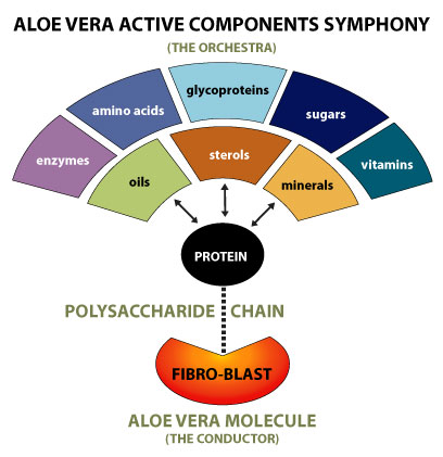 scientists studies healing benefits of aloe vera School of bio sciences and technology, vit university, vellore 632014, india   bioactive compounds and medicinal properties of aloe vera l: an update   extensive research, especially in the area of basic biochemical.